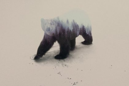 Polar Bear © Andreas Lie